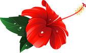 piros Hibiszkusz virág