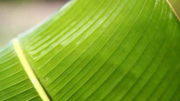 zöld leveles