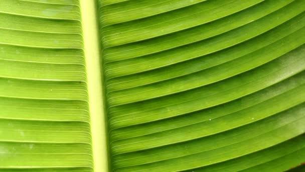 Wassertropfen auf der Blattoberfläche