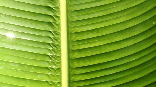 Kapky vody na povrchu listů