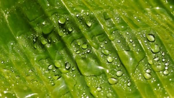 mokrý zelený list