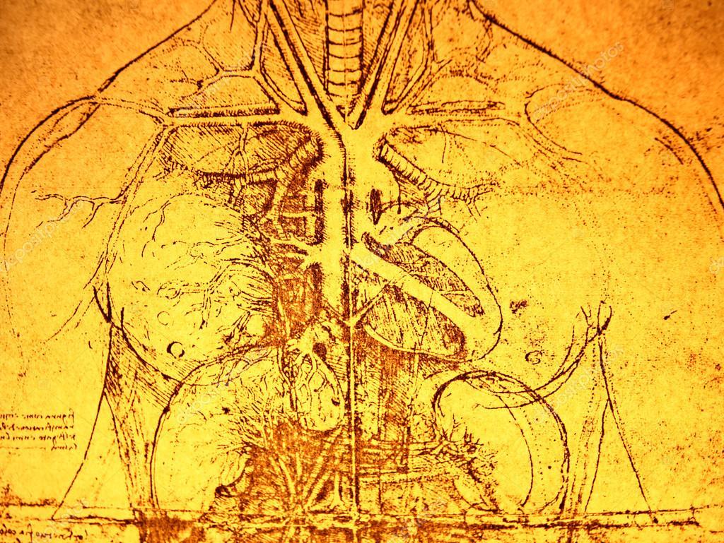 alte Anatomie — Stockfoto © janaka #29990143
