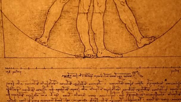 Leonardo Da Vinci Anatomy Stock Video Janaka 32654335