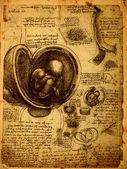 Photo Anatomy