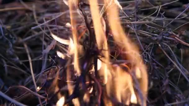 tűz ég