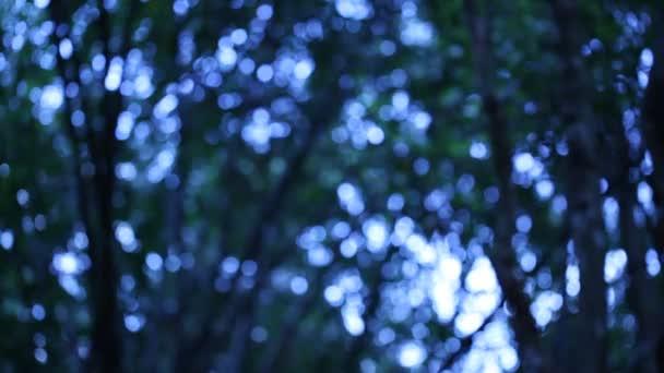 Les zelené pozadí