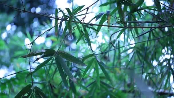 lesní pozadí