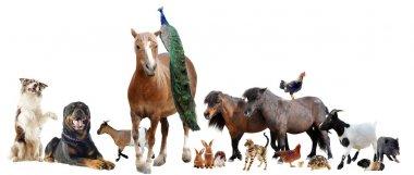 """Картина, постер, плакат, фотообои """"сельскохозяйственные животные"""", артикул 12743450"""
