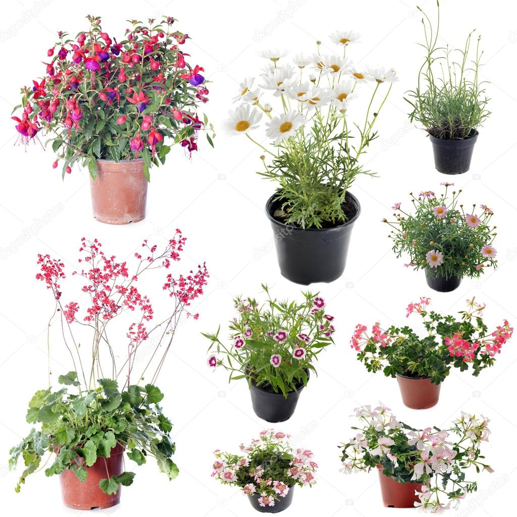 flower plants in pot