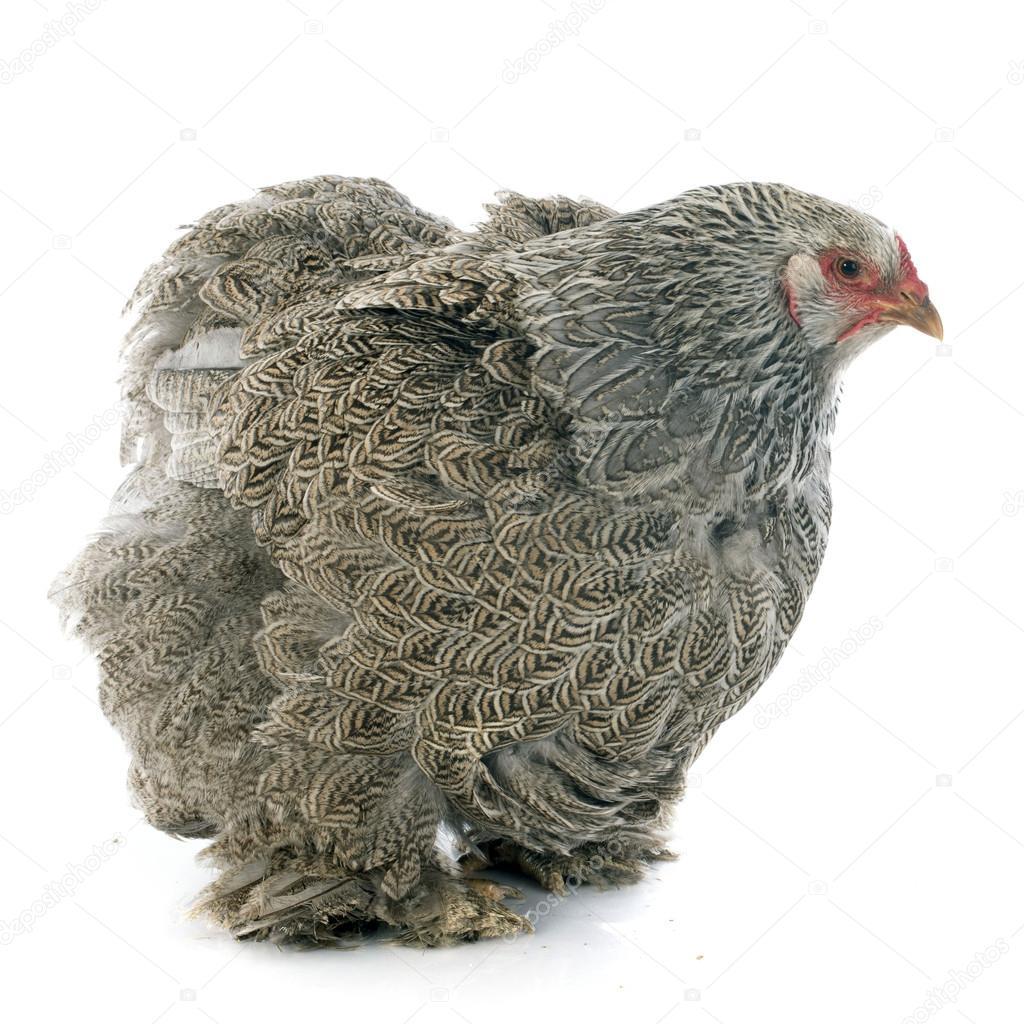 gallina chatrooms Drak: sftsmile es el nombre de usuario de una persona que murió mientras chateaba en estos chatrooms que te pone la piel de gallina y te hace estremecerte.