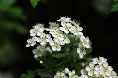 White flowers over natural background