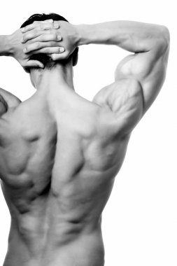 The male back.
