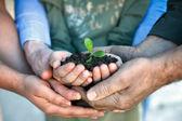 fiatal növények, kezében