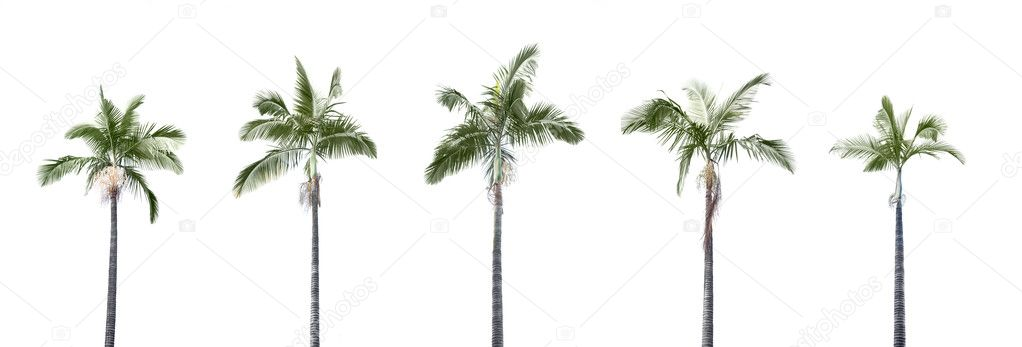 Group of plam trees isolated on white background