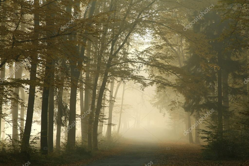 Фотообои Autumn forest on a misty morning