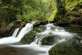 flusso di foresta