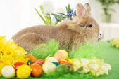 Fényképek húsvéti nyuszi
