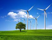 Fényképek zöld környezet