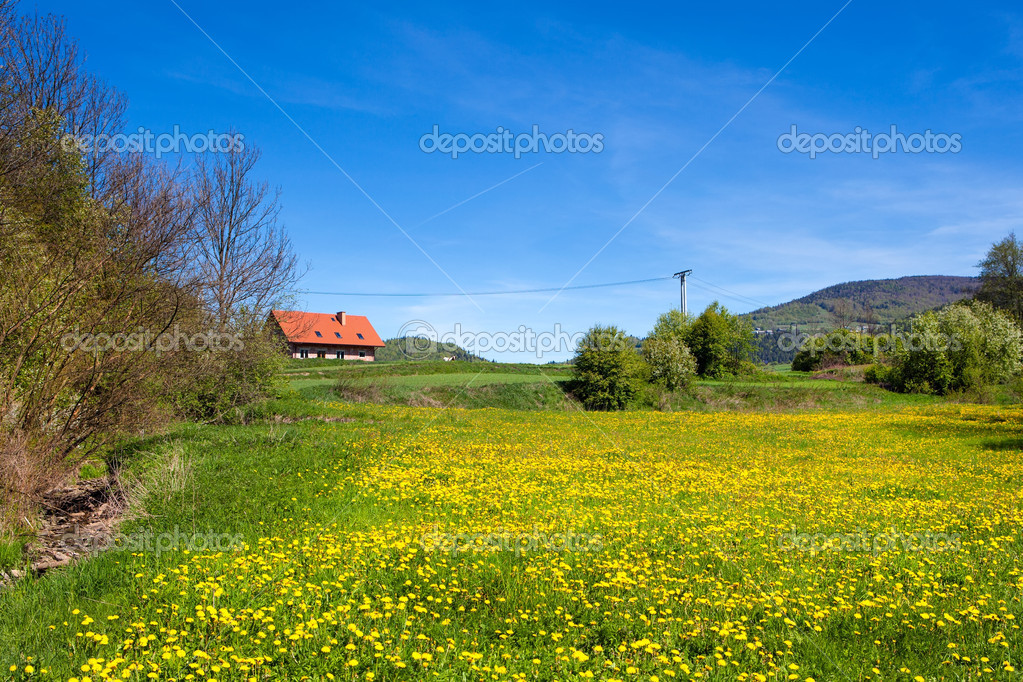 Country spring landscape