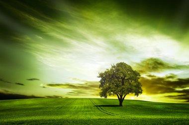 """Картина, постер, плакат, фотообои """"зеленая природа фото"""", артикул 22125601"""