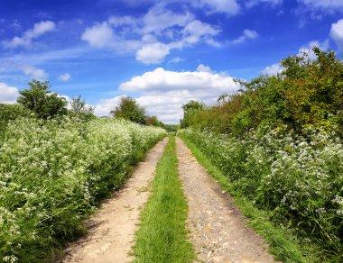 Spring green path