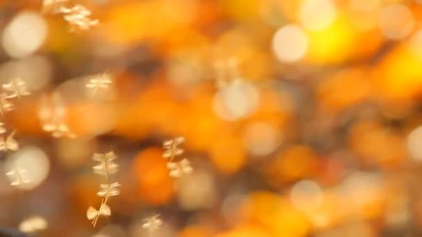 Insekten auf herbstlichem Hintergrund
