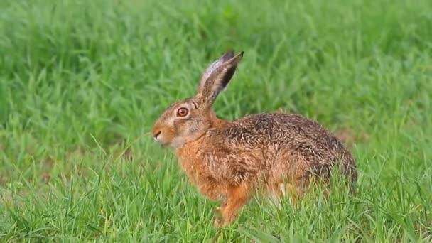 roztomilý zajíc