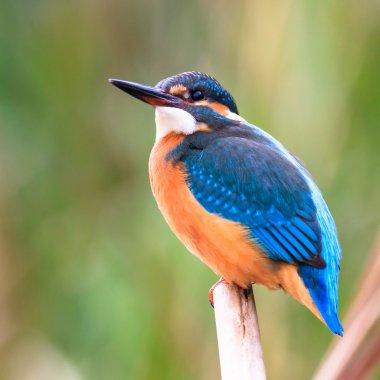 Wild bird in natural habitat, nature series stock vector