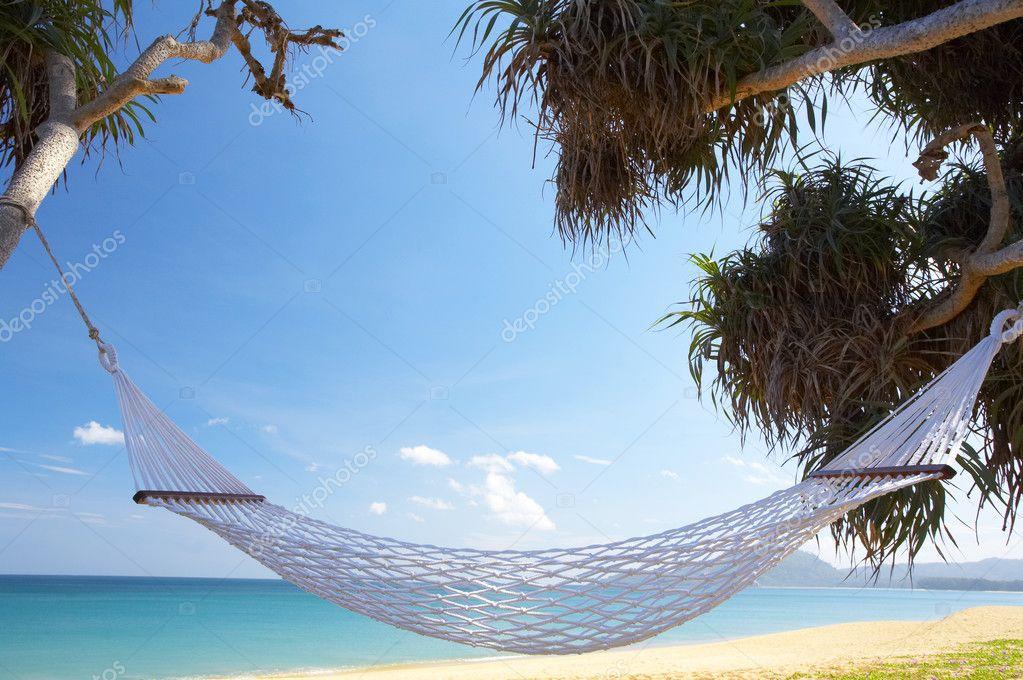 Palm and hammock