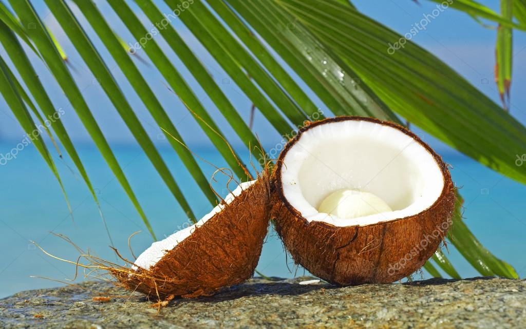 Close up view of big coconut sprout on the beach