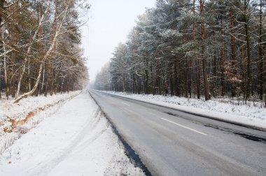 Road through the woods in winter