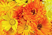 Calendula flowers yellow and orange bouquet