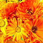 Calendula flowers bouquet