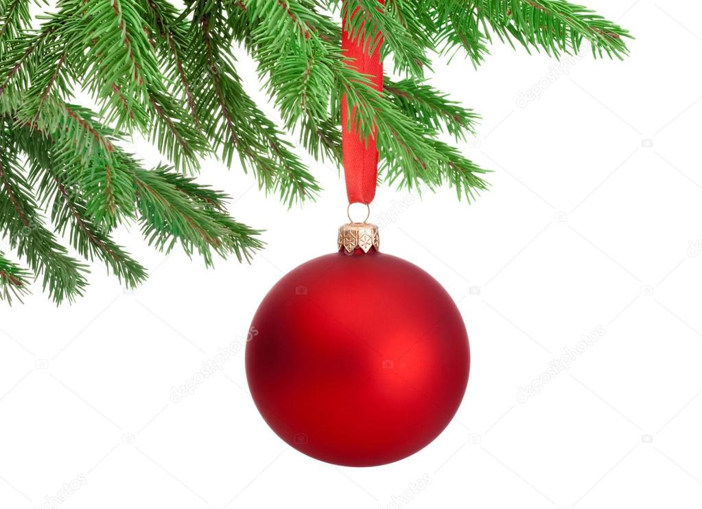 Christmas red ball hanging on a fir tree branch Isolated on whit