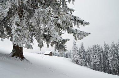 Kışın dağ orman