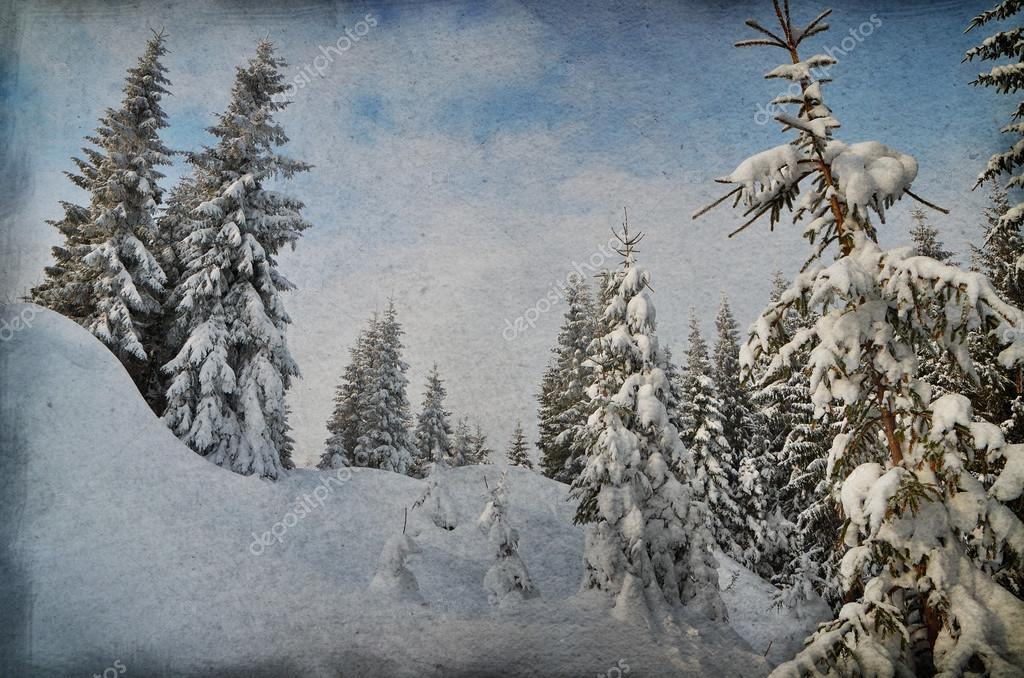 Winter in the mountain forest