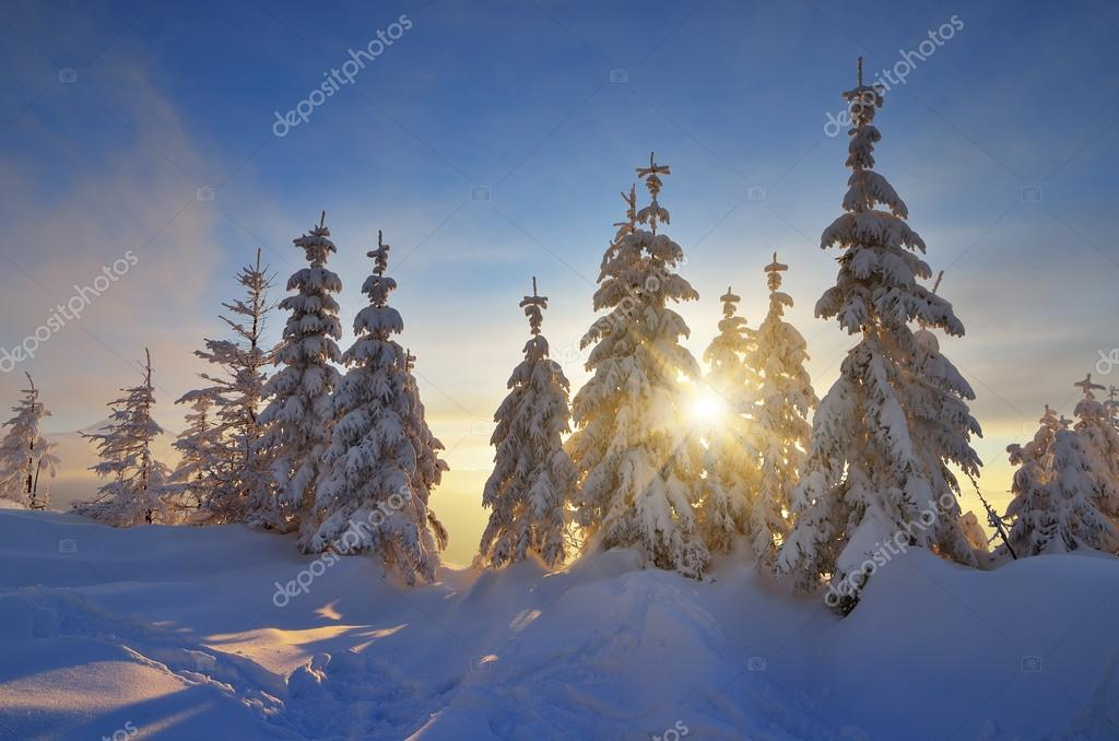 Sun rays in the trees under the snow
