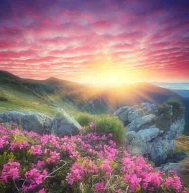 "Картина, постер, плакат, фотообои ""рассвет с цветами в горах визитки"", артикул 50634233"