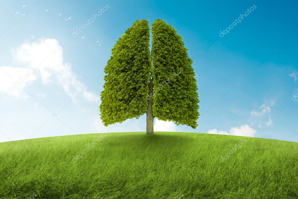 The lungs of Earth