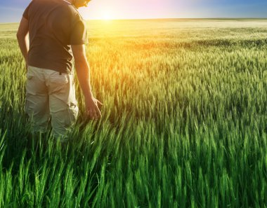 Man in wheat field and sunlight stock vector