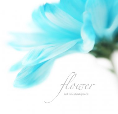 Soft focus flower background with copy space. Made with lens-bab