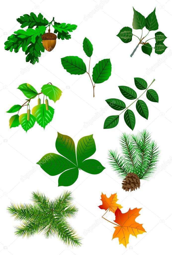 Herbarium Blätter blätter herbarium stockvektor sababa66 50080871