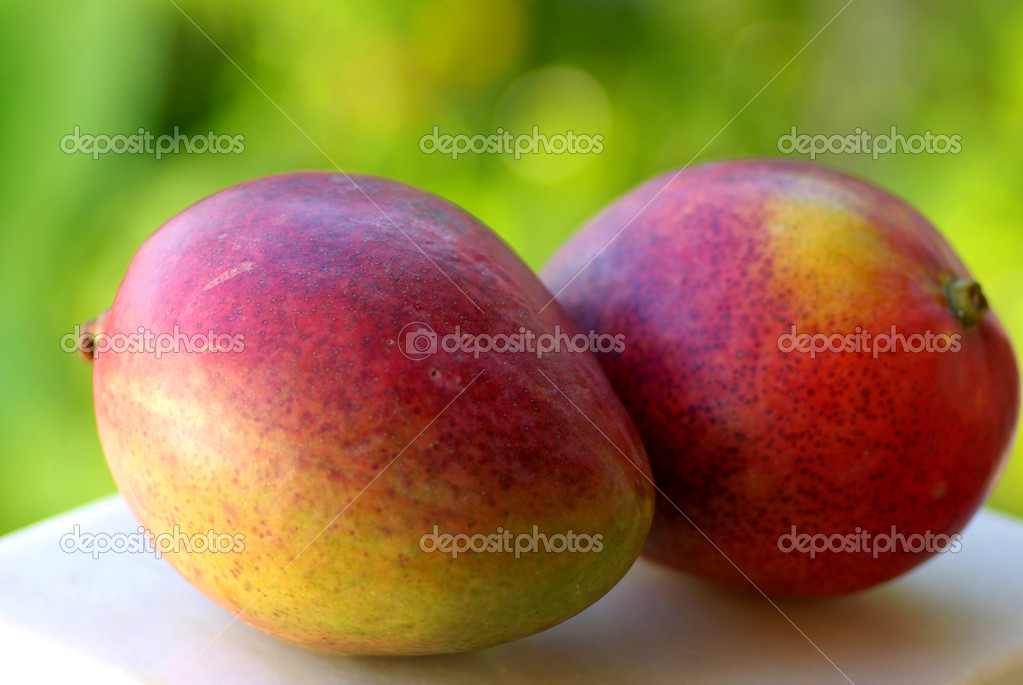 Two mangoes fruits are isolated on green background.