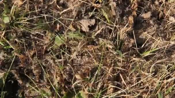 mravenci na Mravenčí kopec nesr