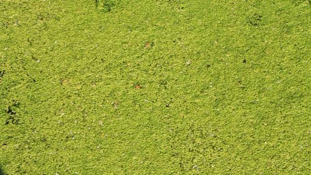 Bog. Natural green background