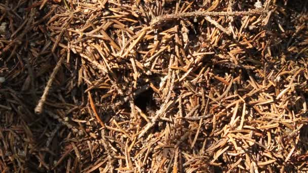 Ants in anthill