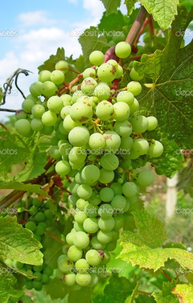 love wined Wintersport-Singles thrilling little