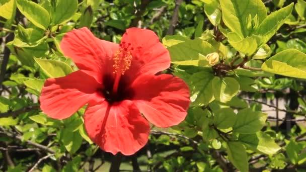Piros virág, zöld fa