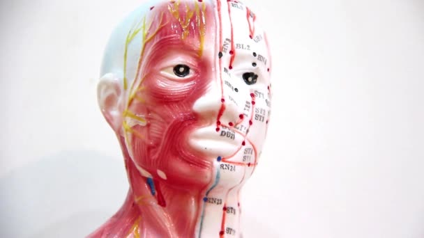 organizace lidského těla