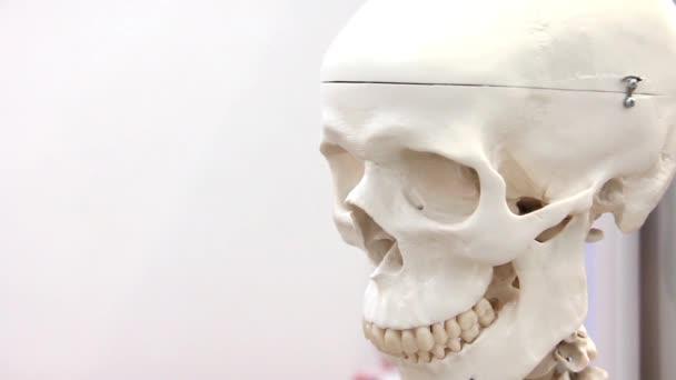 cranio medico bianco